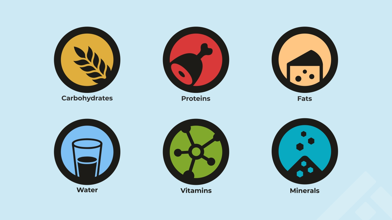 6 essential nutrients