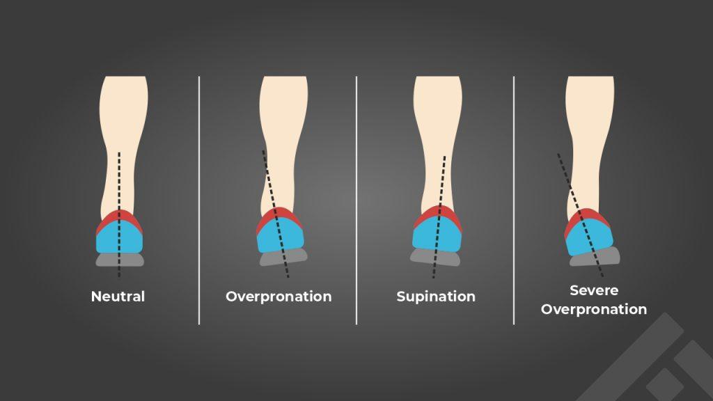 Foot anatomy: Pronation