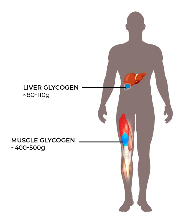 Glycogen stored in the liver and muscles