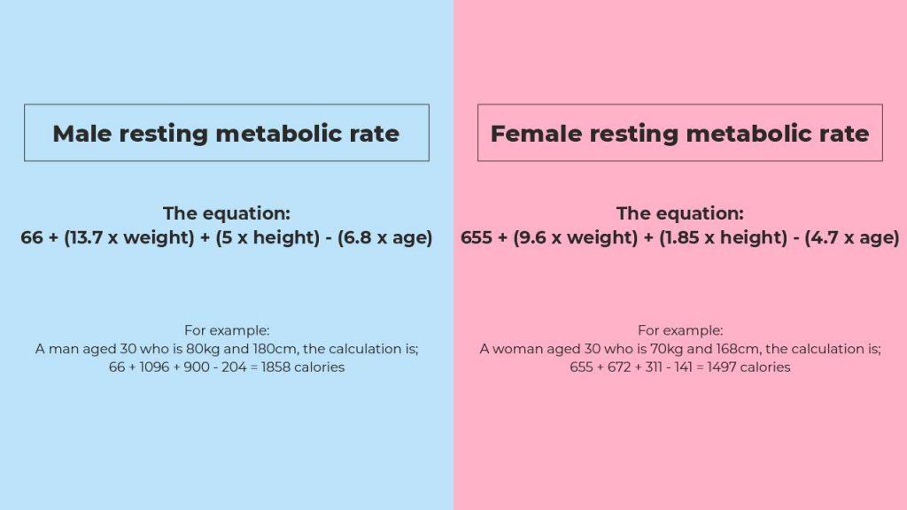 men and women BMR