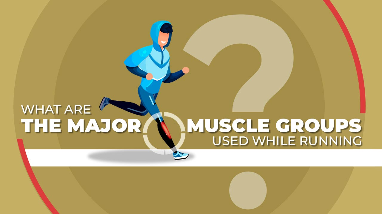 What are the Major Muscle Groups Used while Running?