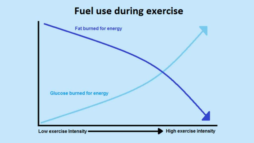 fuel use during exercise