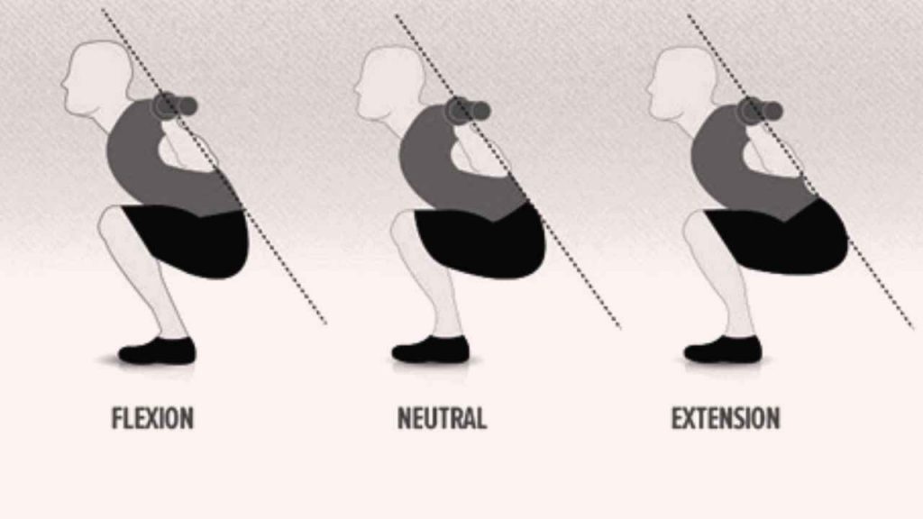 pelvic positions during squatting